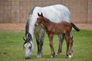 Foals 6 2016